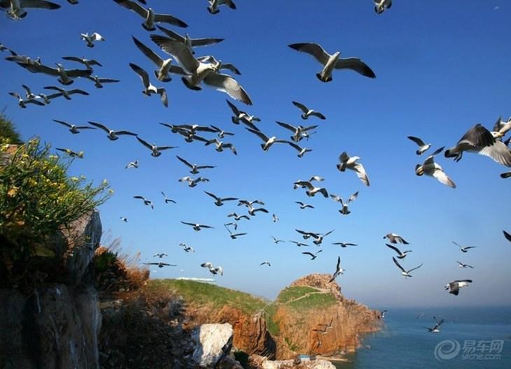 海驴岛距海岸1600余米,面积1312平方米。据神话传说,二郎神挑山填海曾行至成山,正行间忽闻东海有驴的叫声,西岸有鸡的鸣声,一惊之下,扁担折断,挑筐亦随之落入海中,遂化为两岛海岛。从此,人们便称东岛为海驴岛,西岛为鸡鸣岛。两岛之间各有一块耸天而立、高有数丈的石柱,便喻为扁担石。虽为神话,两岛自然形状亦与神话十分相配。海驴岛上,山石景色,神奇莫测。经长久的潮水波浪冲击侵蚀,岛之四周岸崖已是满目疮痍,洞孔累累,千奇百怪,各具风韵。大的海蚀洞内可以行舟,小的海蚀洞则仅能容纳数人。粉红色的岩石,层层叠叠,造型