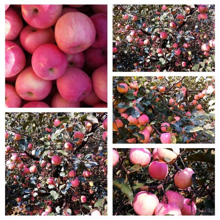 秋天丰收的果园