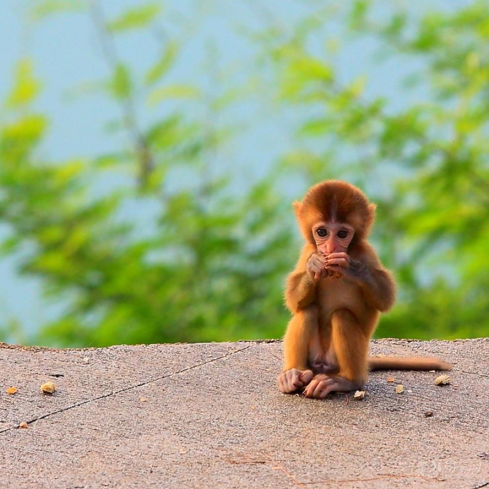 调皮的小猴子作文