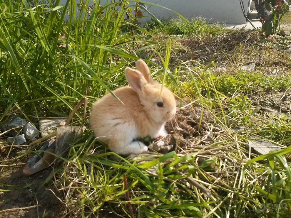 【阳光萌宠】欢迎新邻居-小兔子