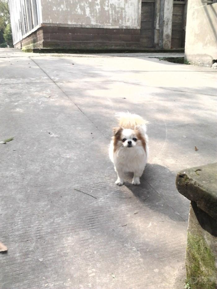 【【宠物帝】小美也有情】_心情v宠物表情_汽沉重论坛包图表情图片