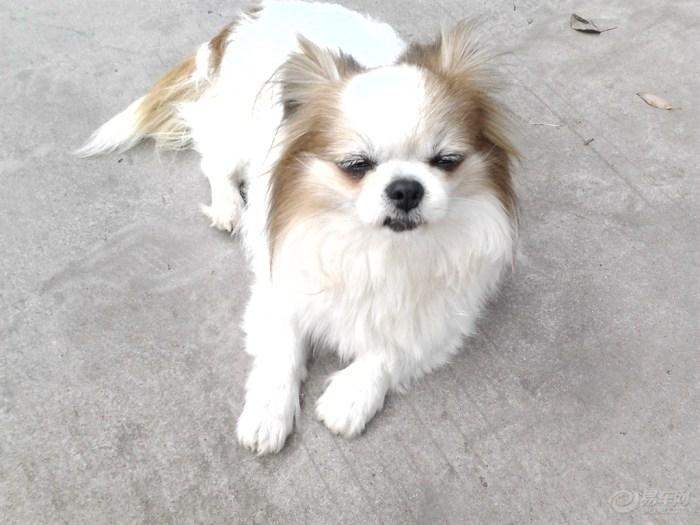 【【宠物帝】小美也搞笑】_大全v宠物表情_汽论坛包有情表情图片