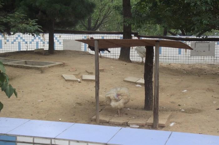 山东长安车友会曲阜分会——游济南野生动物园(下)