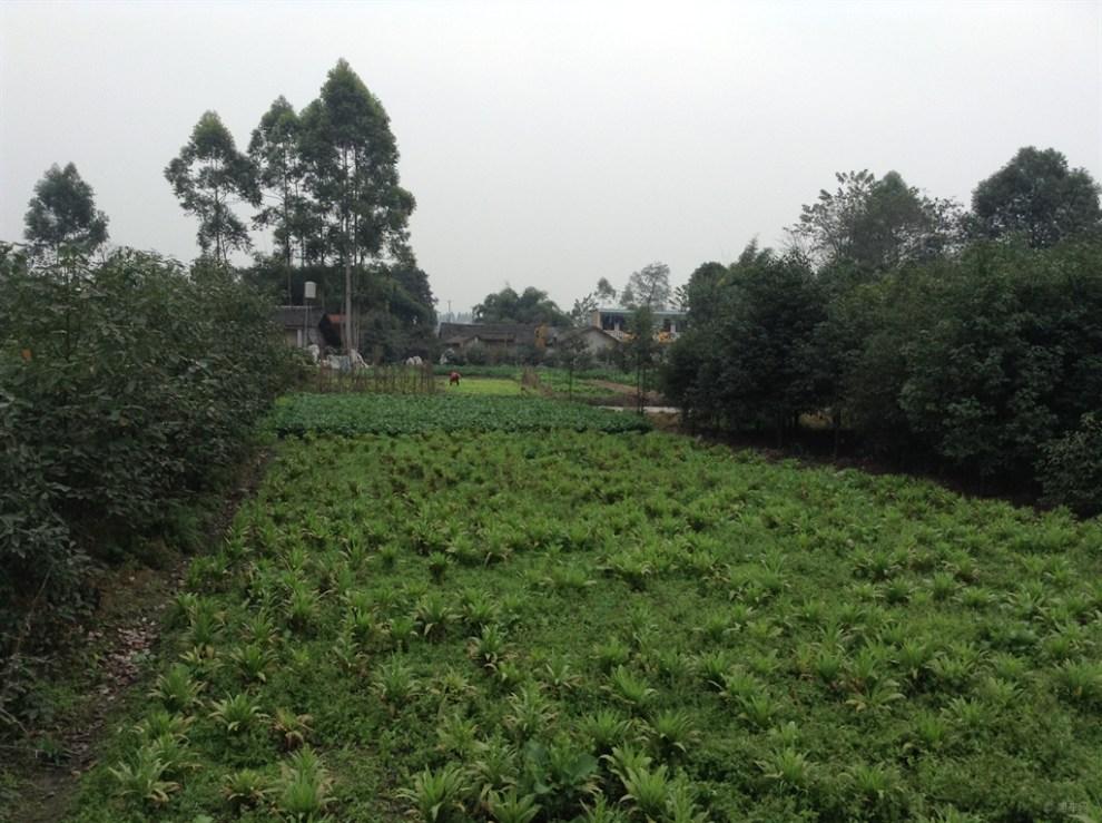 新津宝梓山森林公园