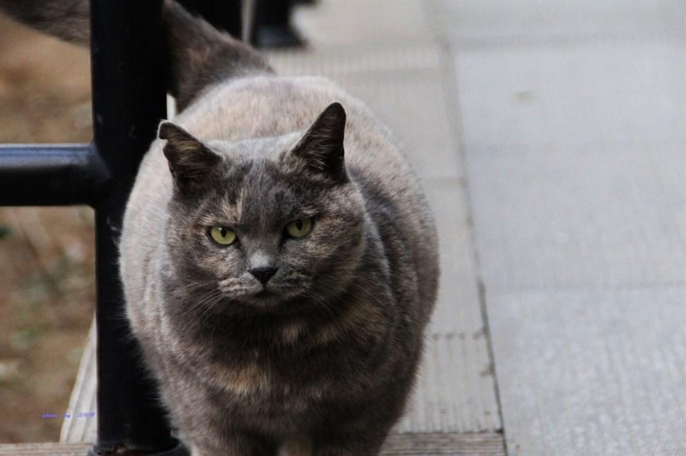 【胖猫!】_陕西论坛图片集锦_汽车论坛-易车网