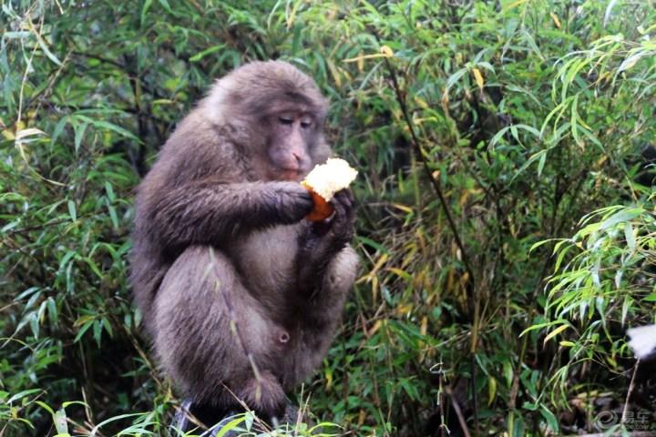 【吃食物的猴子.】_宠物当家论坛
