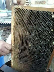 采蜂蜜学画画周末跟着文艺青年走!