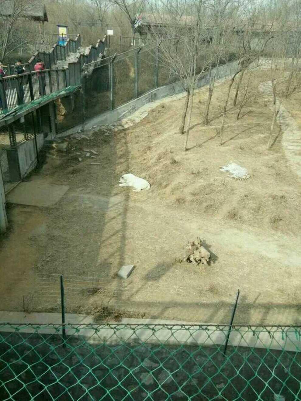 石家庄辛玛王国之动物园