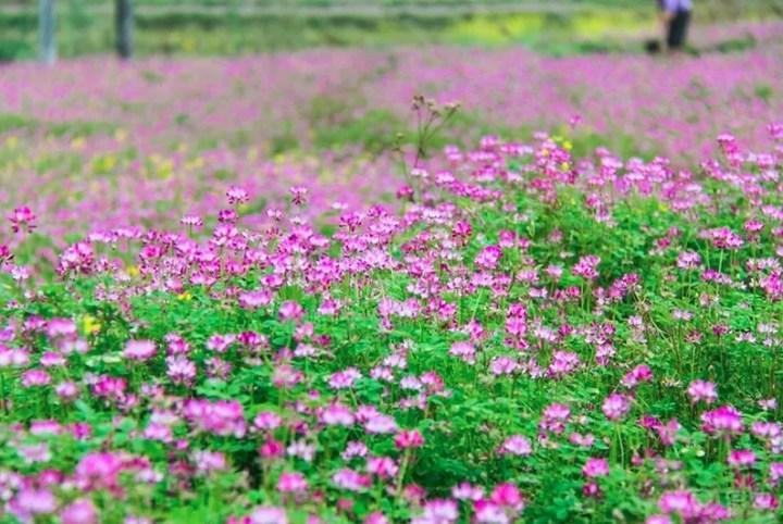 捷达眼中桂林的春天,带你深度游桂林