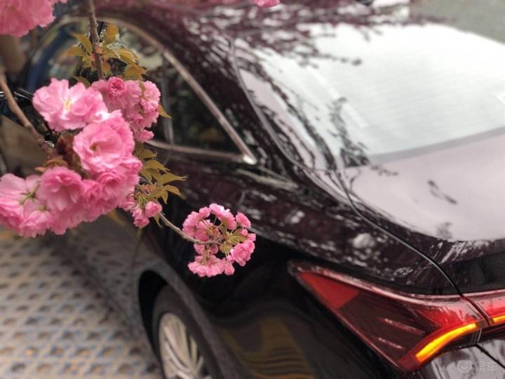 当我的大龙遇到樱花树 故事就来了