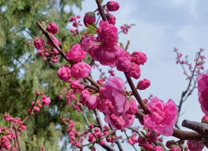自驾赏春色,听夏季来临的声音