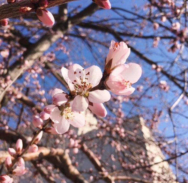 自驾寻景美出天 桃花依旧笑春风