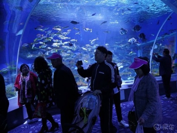 带孩子探寻威高海洋馆