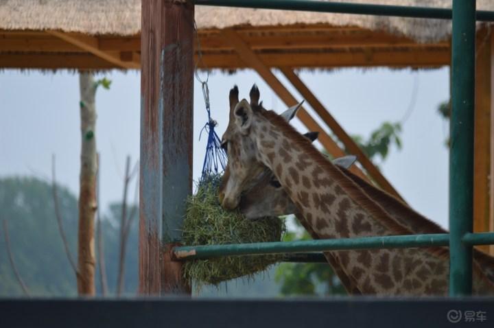 动物园游记