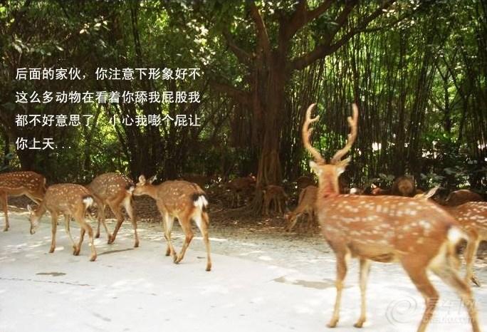 【自驾达人】自驾游览广州长隆野生动物园