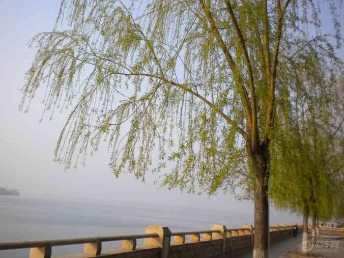 河边的柳树发芽象征着春天来到了