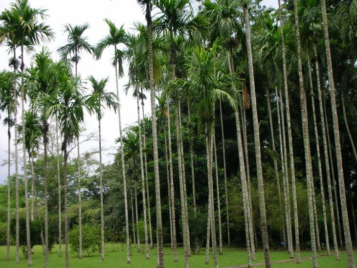 雨林植物矢量图