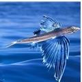 海边想飞的鱼