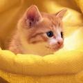 小小依只猫
